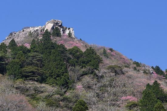 山頂ピンク