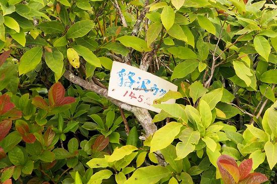 貉沢カッチ
