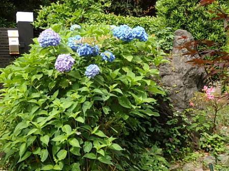 003_convert_20180605115108②紫陽花の庭