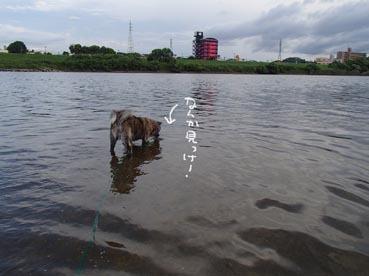 水ダッシュ5