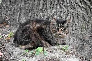 Mok The Cat