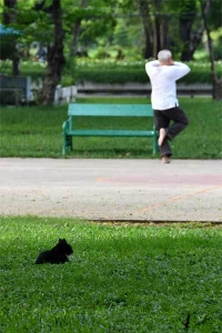Tai-chi practitioner and Cat of Lumpini Park, Bangkok Thailand