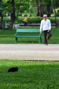 Tai-chi practitioner and Cat of Lumpini Park, Bangkok Thailand
