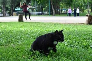 Cat of Lumpini Park, Bangkok Thailand