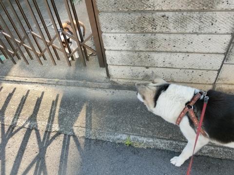 2018-07-14 散歩 008 (480x360)