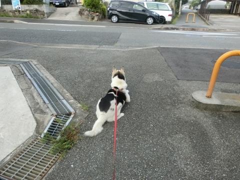 2018-07-27 散歩 014 (480x360)