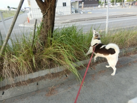 2018-08-03 散歩 001 (480x360)