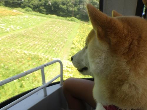 白馬岩岳ゆり園・ゴンドラに乗って山頂へ