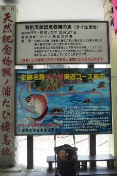 H30071603鯛の浦遊覧船