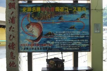 H30071615鯛の浦遊覧船