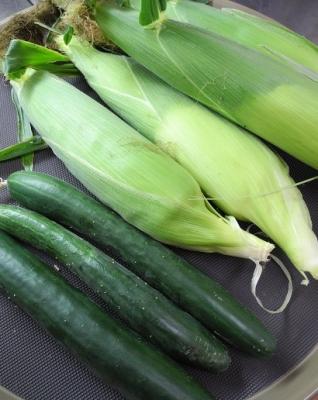 20180725採れたて野菜