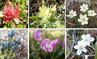 20エスプラナーデの花々