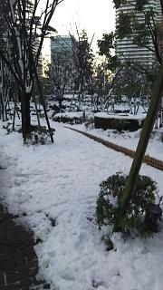 20180123降雪(その3)