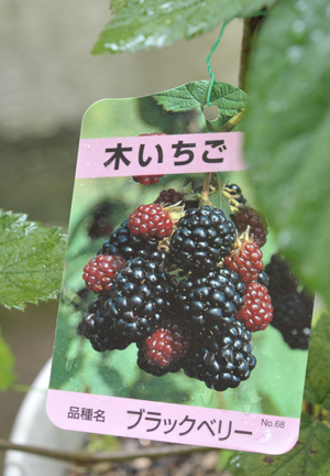 blackberry20180705-1.jpg