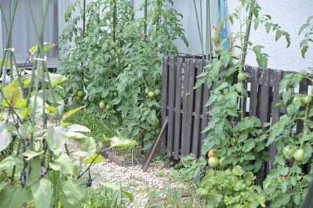 tomato20180624-2.jpg