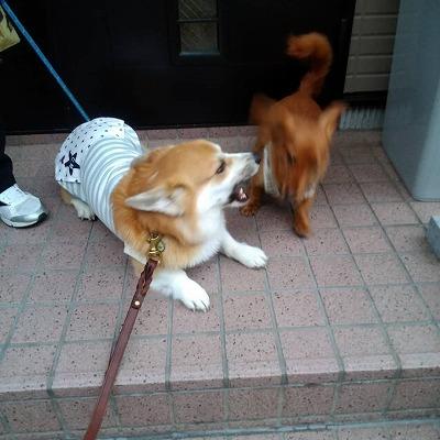 s-朝の散歩(4