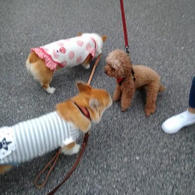 s-朝の散歩(1