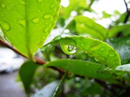 雨だれ3(2018-05-28)