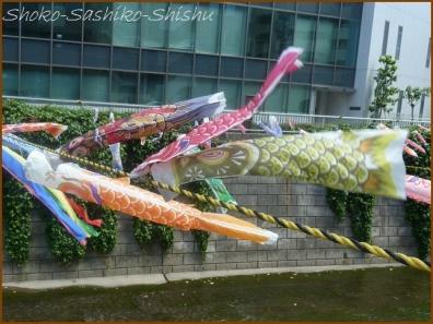 20180505  鯉  7   神田川の鯉