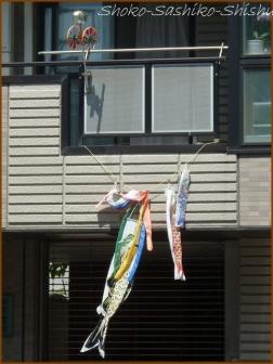 20180505  鯉  11   神田川の鯉