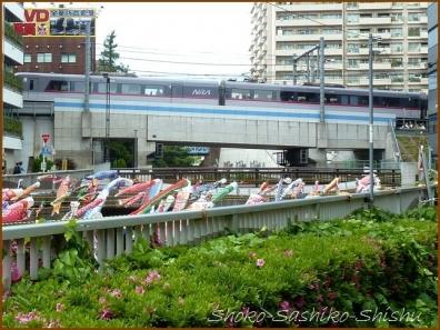 20180505  川面  4   神田川の鯉