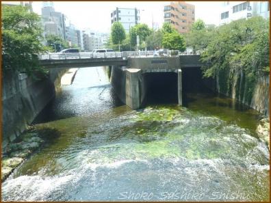 20180719  高戸橋  1     神田川