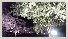 キャプチャ 夜桜 40