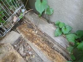 敷地内の木材