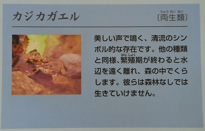 DSC_6860_20180618062131c32.jpg