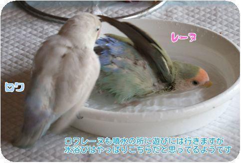 ③レーヌ水浴び