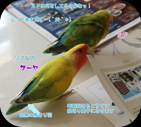 ①サーヤの羽