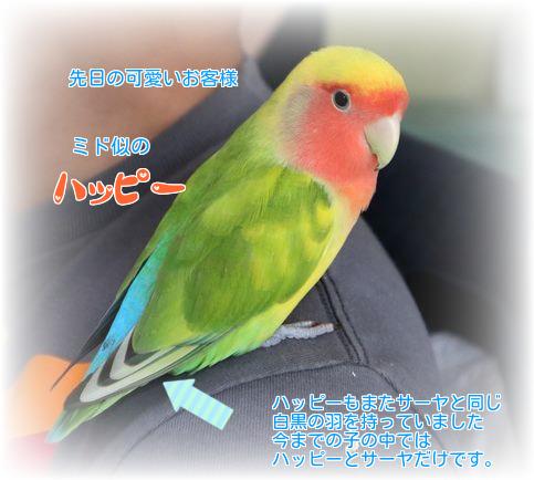 ②ハッピーの羽