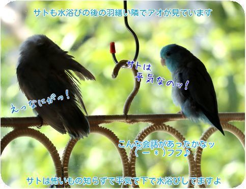 ⑥サトも水浴び