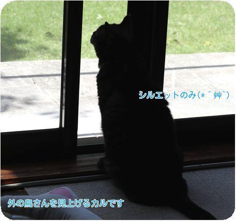 ⑧鳥を見るカル