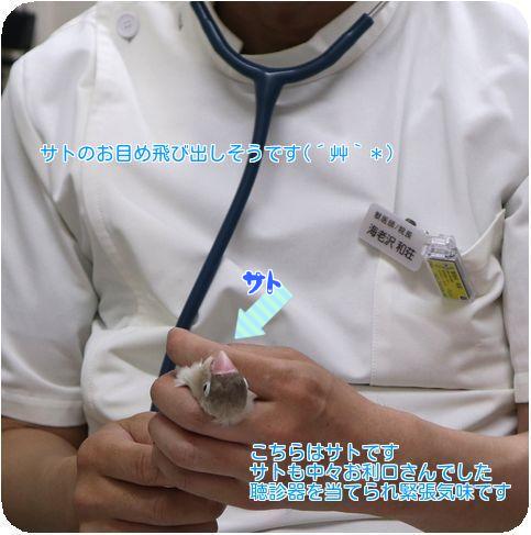 ⑤サト聴診器