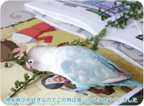 ③穂紫蘇大好きサト
