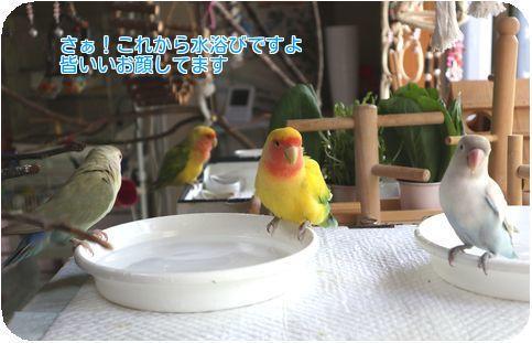①水浴び場にて