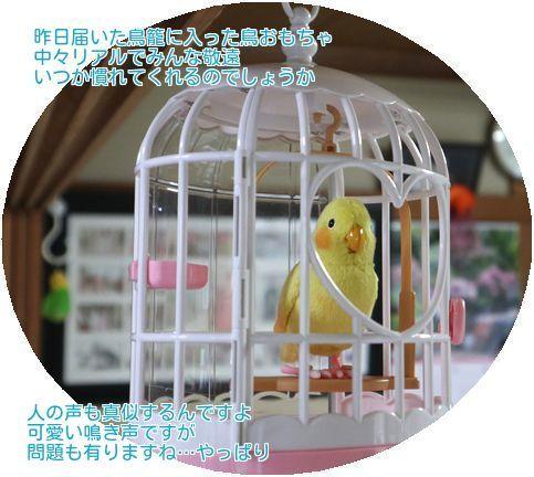 ①鳥おもちゃ