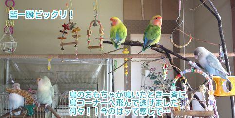 ②不思議に思う鳥たち