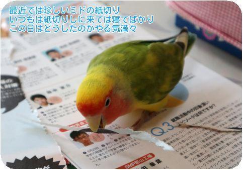 ①ミド紙切り