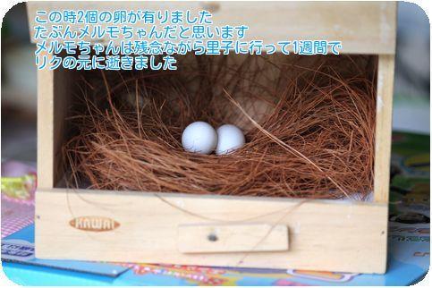⑥レーヌの卵