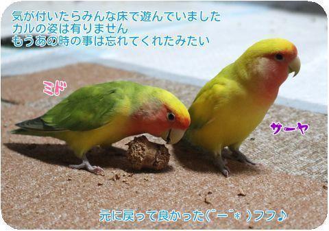 ①ミドコルク遊び