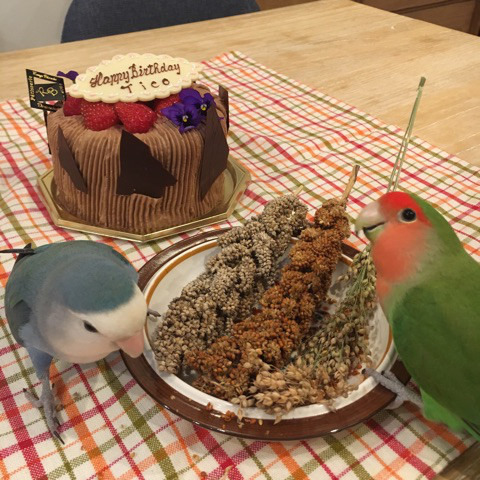 7月ティコさん誕生日