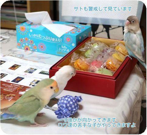 ④キャンディーボール