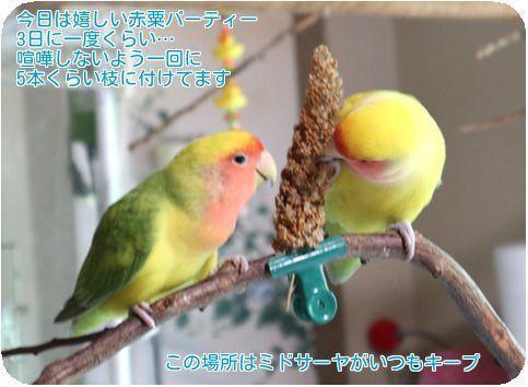 ①ミドサーヤ粟穂