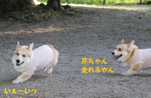 走れるやん