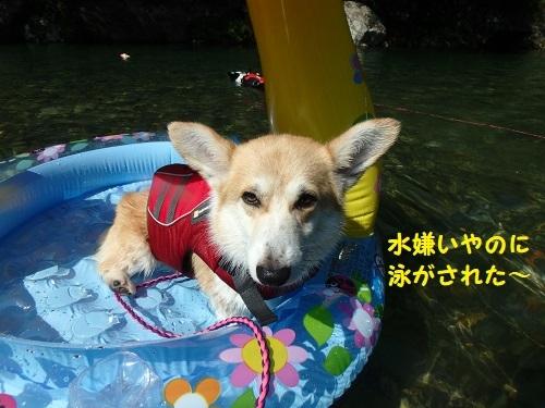 泳がされた