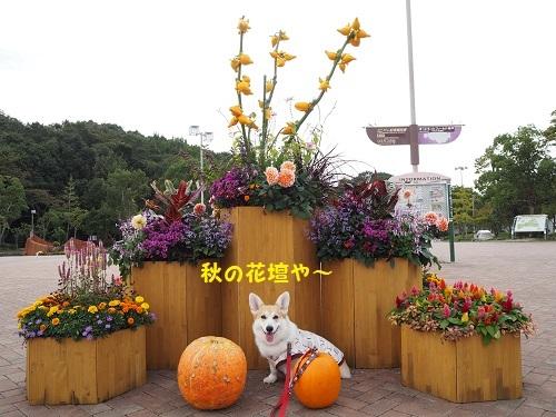 1秋の花壇