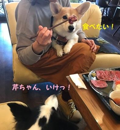 4芹ちゃんいけ!