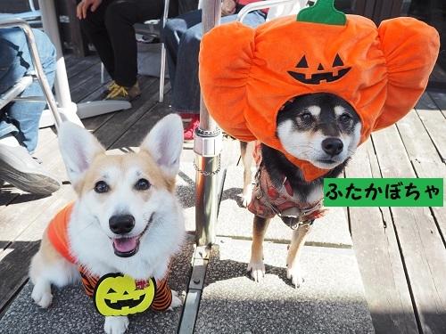 3ふたかぼちゃ